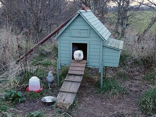 chicken house home loan